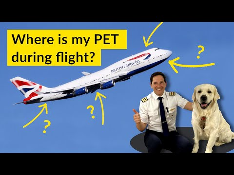ANIMALS on PLANES? Is your PET SAFE flying in CARGO??? Explained by CAPTAIN JOE