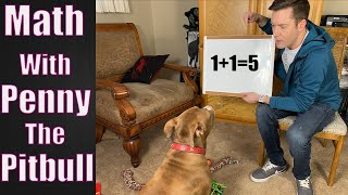 TEACHING PENNY MATH...AGAIN!!!   Robby and Penny