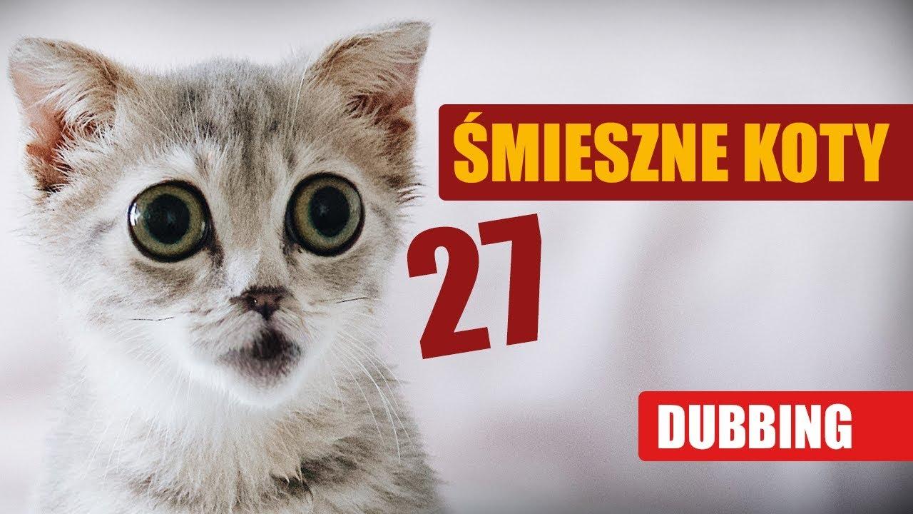 ŚMIESZNE KOTY #27 ???? DUBBING: MATT OLECH