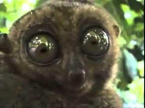 Милые Забавные Лемуры! / Lemurs Funny!
