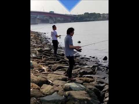 東海埠頭公園で釣り