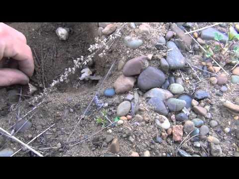 ловля в веснянку видео