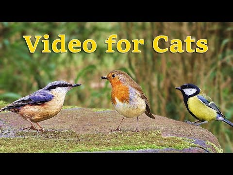 Videos for Cats : Birds in April