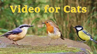 Download Videos for Cats : Birds in April Extravaganza MP3 and video free