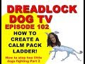 EPISODE 102   How to create a calm pack ladder (how to stop two little dogs fighting Part 2)