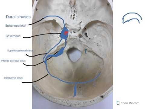 Dural sinuses - YouTube