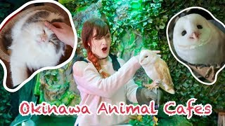Okinawa Animal Cafes: Cats, Owls, Snakes, Giant Rabbits, & more!