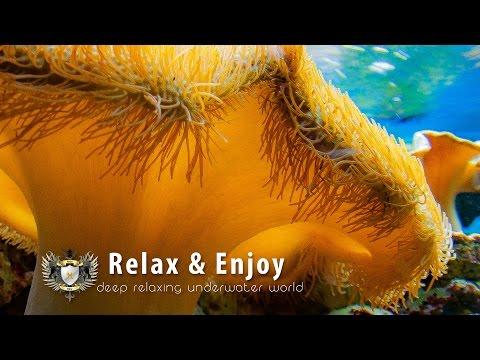 ★ 2 HOURS Relaxing Music, Sleep Music, Dream Music | Underwater World ★