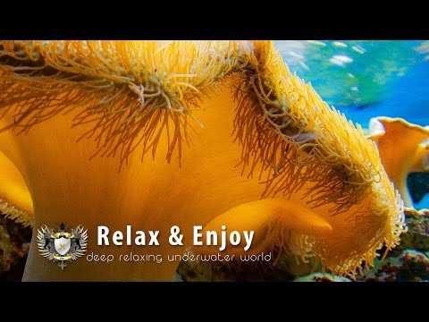 ★ 2 HOURS Relaxing Music, Sleep Music, Dream Music | Underwater World ★