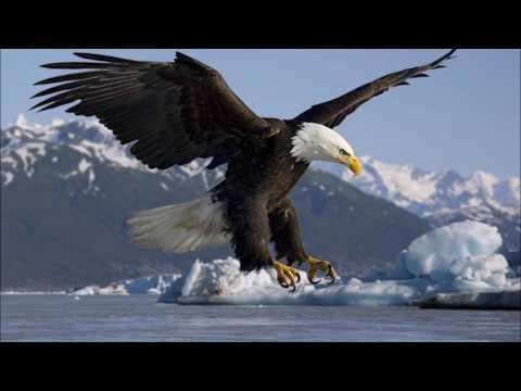 Eagle Ringtone | SFX | Animal Ringtones