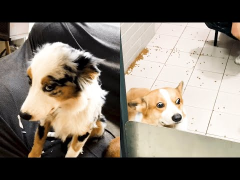 Who Did That?! | Funny Guilty Dogs Video Compilation 2019