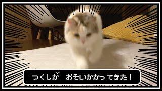 布団のすきまから指を見せると猛獣と化す猫【おしゃべりする猫】
