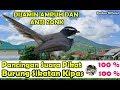 Pancingan Suara Pikat Burung Sikatan Kipas Dijamin Paling Ampuh Dan Anti Zonk  Mp3 - Mp4 Download