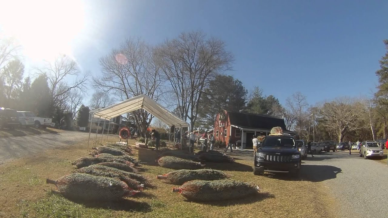 Jordan Lake Christmas Tree Farm - YouTube