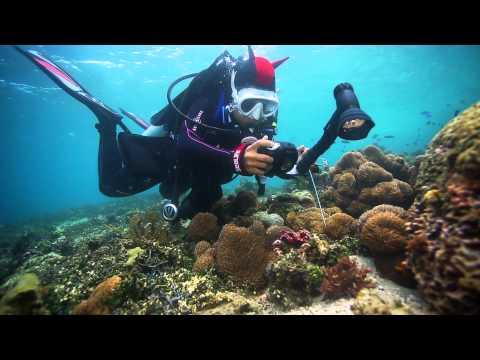 SeaLife Underwater Cameras | Diving Indonesia with SeaLife Underwater Cameras, Lights and Lenses