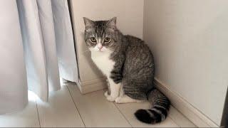 1日中猫をほったらかしにしたら口を利いてくれなくなりました…