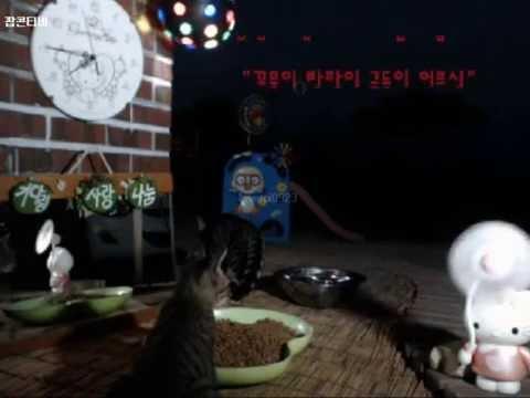 Cats Meok Bang : Stray Cats in South Korea [팝콘티비 BJ도둑고양이 나비월드] 160821 쪼꼬주니어, 반팔이주니어 오후7시40