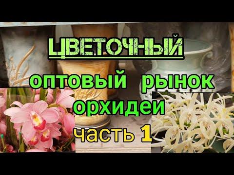 Цветочный  оптовый  рынок . Орхидеи .Часть 1