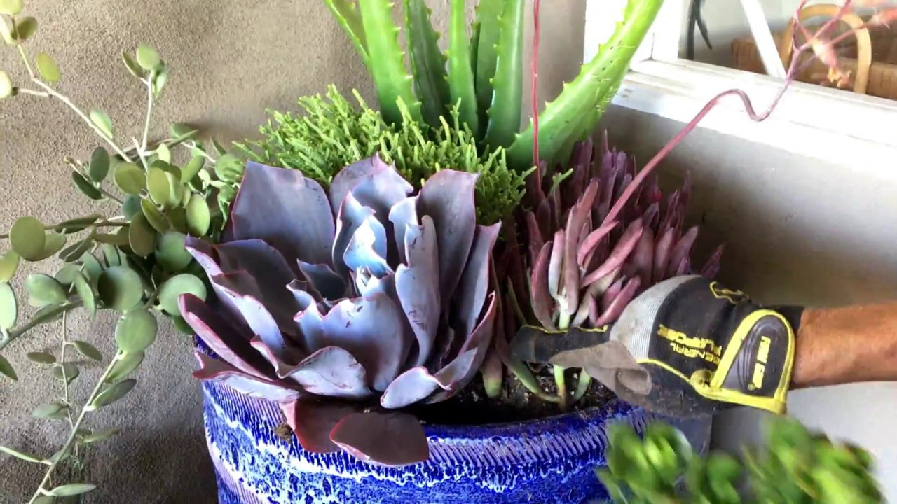 Full shade succulent arrangement youtube for Succulents that do well in shade