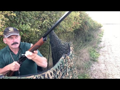 The Shooting Show - Pigeon Shooting With Steel Shot And Biodegradable Wads