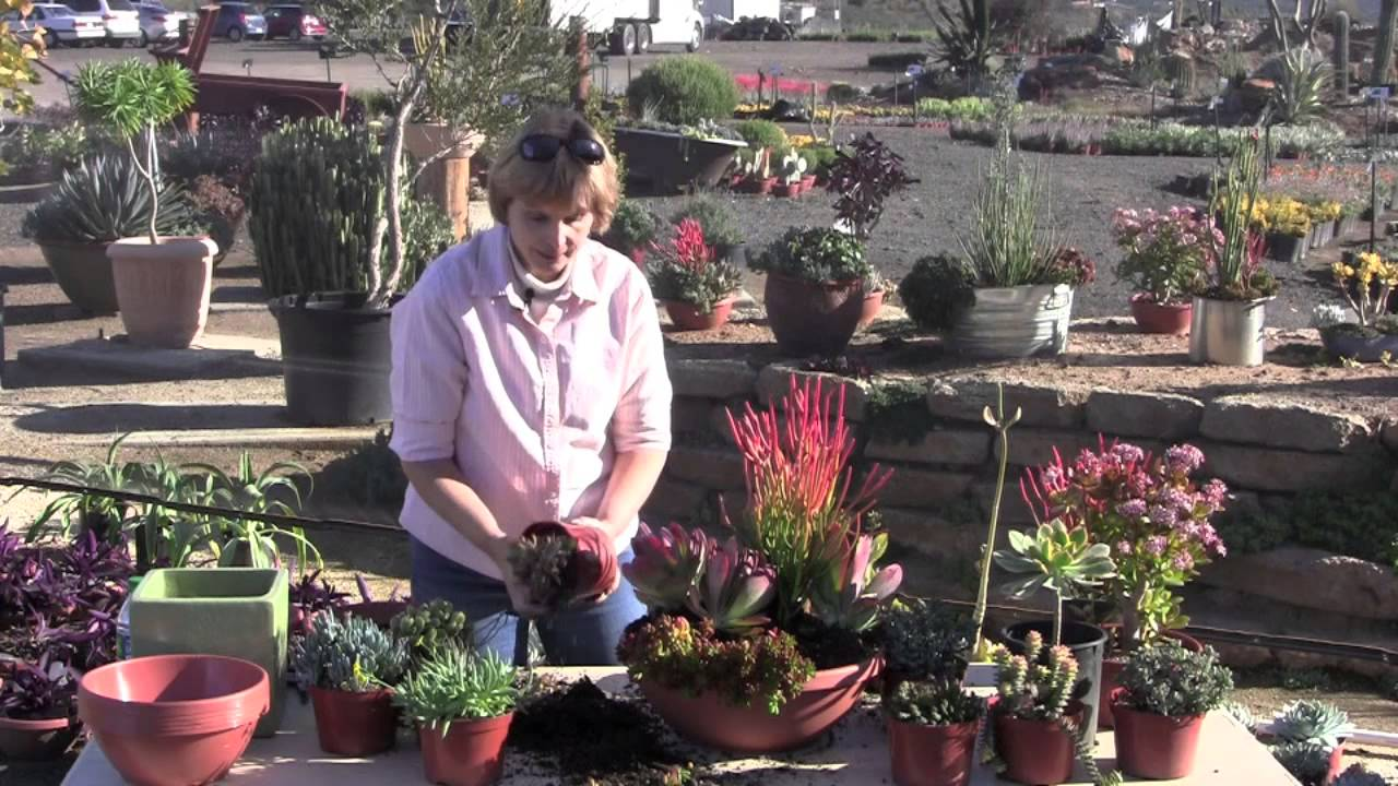 Create a quick colorful succulent container garden youtube - Succulent container gardens debra lee baldwin ...