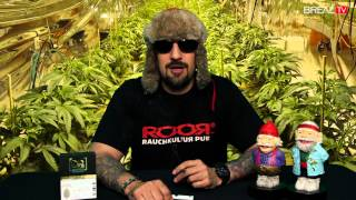 Strain Review w/ Dr. Greenthumb - White Fire OG #5 | BREAL.TV