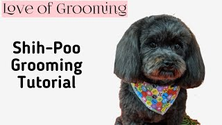 Grooming a ShihPoo Tutorial
