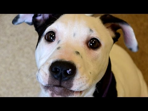 Видео: Happy National Puppy Day These Adorable Pooches Will Make You Smile