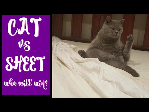 CUTEST CAT video ever! | Cats know how to do the housework, for sure!