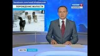 Вести-Хабаровск. Жертвы бродячих собак