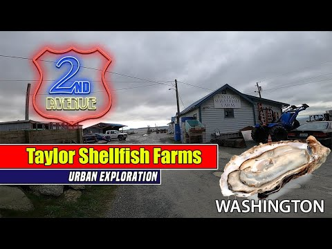 BEST OYSTERS IN THE NORTHWEST | Taylor Shellfish Farms Washington