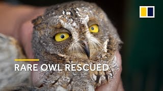 Rare owl rescued in Shanghai, China