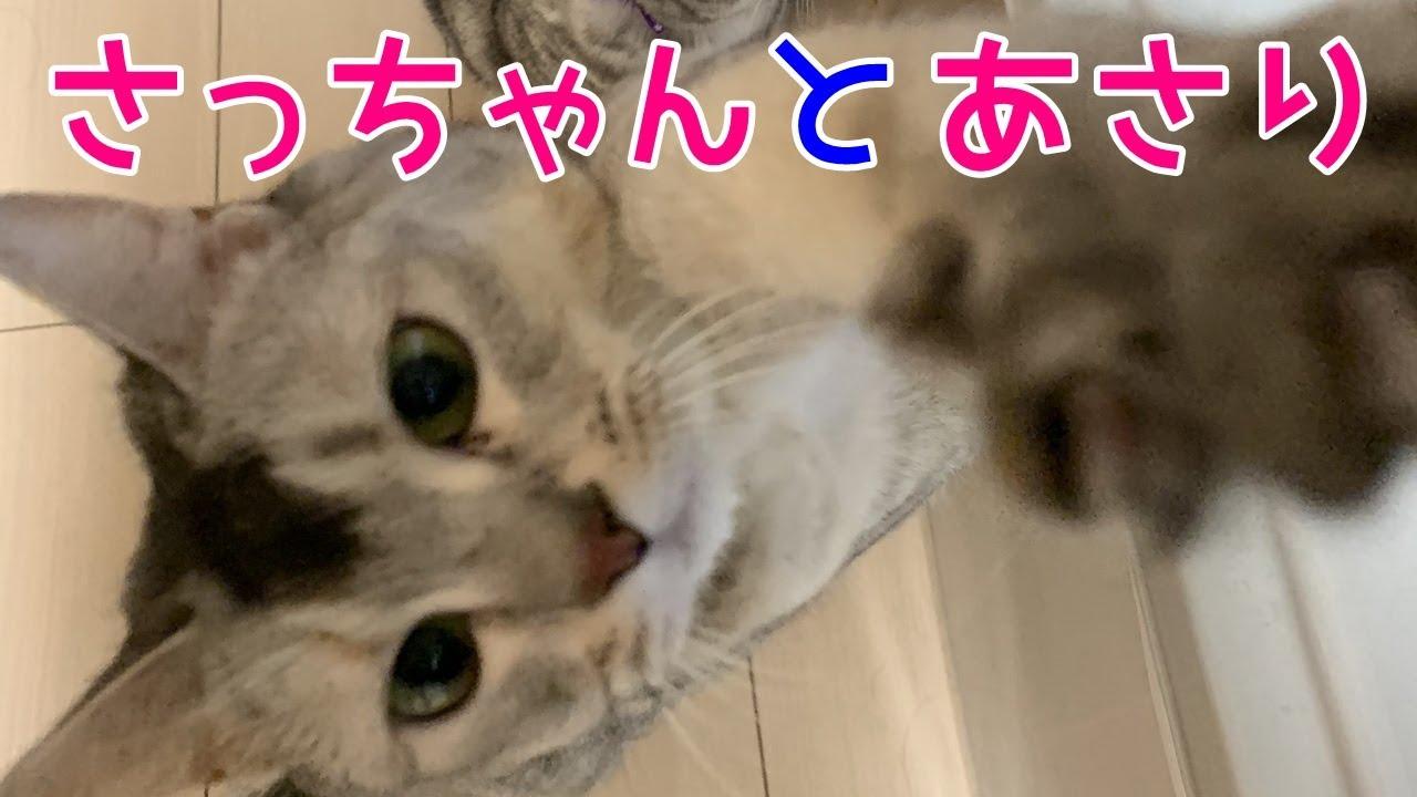 を 関西 しゃべる 猫 弁