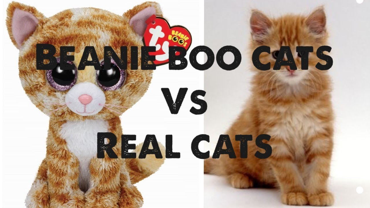 51141a58a35 BEANIE BOO CATS VS REAL CATS - WHO IS THE CUTEST  (also watch BB dogs vs  Real Dogs)