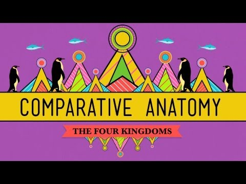 Comparative Anatomy: What Makes Us Animals - Crash Course Biology #21