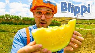 Blippi Visits Tanaka Farms | Blippi | Learning Videos For Kids | Educational Videos For Toddlers