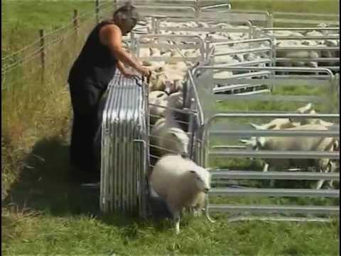 Alligator Mobile Sheep Handling System
