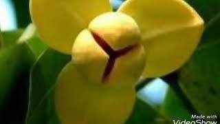 เพลง ลำดวนตำใจ จินตรา พูนลาภ