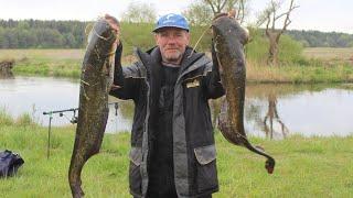 Ловля сома на новом месте Мой монтаж Рыбалка в Беларуси