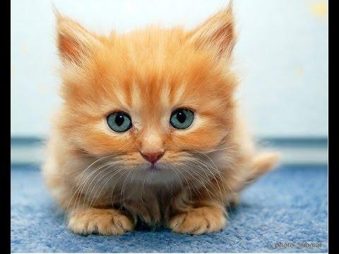 Видео приколы с котятами -