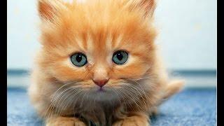 Смотреть про маленьких котят, приколы с надписями!