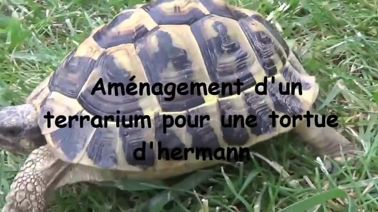 Amenagement Terrarium Pour Tortue D Hermann Youtube