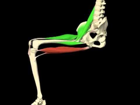Flexión - extensión cadera. Análisis de movimientos. Agonistas y ...