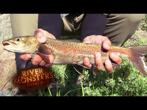 Catching A Strong Lenok - River Monsters