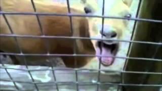Животные поют бибера смотреть всем О_о