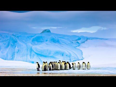 Арктика и Антарктика - чем отличаются?