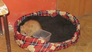 JAROMIN - DPS : mały rudy kotek Placek - figle nazajutrz po usunięciu oka - 154 foto : 15.09.2018