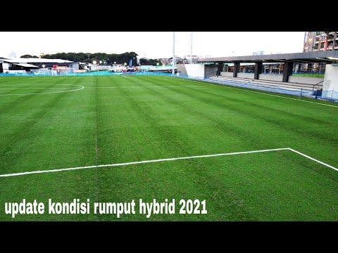 Update Progres Rumput Hybrid Lapangan Latih 1 Dan 2 Di Jakarta Internasional Stadium