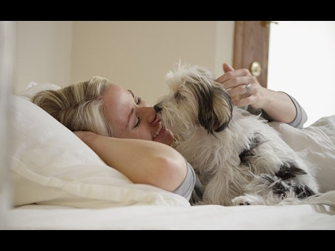 Cute Pets Waking Up Owners Compilation  - Cutes Alarm Clock Ever