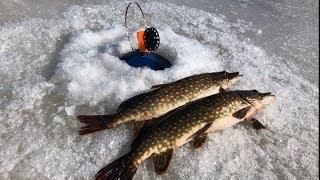 Рыбалка на Ладоге   Ловля щуки на жерлицы